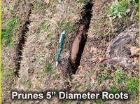 Root Pruner